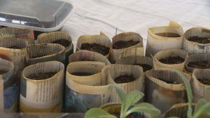 Seedy Saturday: preparing for gardening season in Saskatchewan