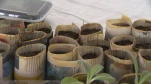 Seedy Saturday: preparing for gardening season in Saskatchewan