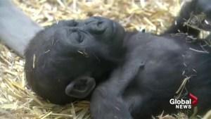Sponsor an animal this Christmas with the Calgary Zoo