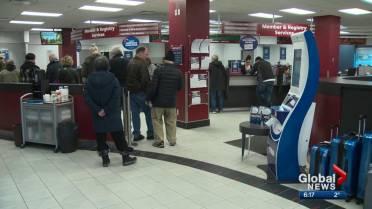 alberta drivers license renewal ama