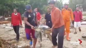 Volunteers work to save stranded turtles following tsunami