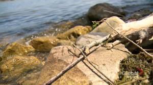 Sask. lakes have below average water levels