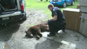 Deadly year for bears in B.C.