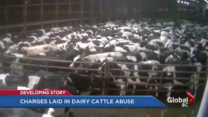 Animal cruelty charges filed against B.C. company