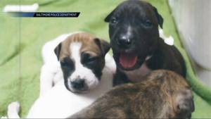 Baltimore police looking for man who stomped 4 puppies to death in front of kids