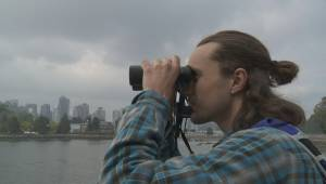 Efforts underway to make bird watching boom in B.C.