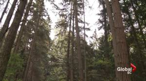 Local author believes tree education leads to saving trees