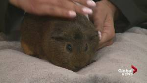 Adopt a Pet: Rupert