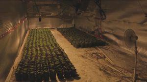 York police bust marijuana grow-op licensed by Health Canada for overproducing weed