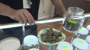 Saskatoon councillors say no to medical marijuana business license