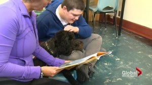 Reading therapy dogs allowed in Moncton high school