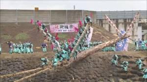 Japanese celebrate dangerous Onbashira festival