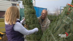 Calgarian with cancer sells Christmas trees to help others battling the disease