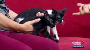 Calgary Animal Services Pet of the Week: Eenie and Meeny