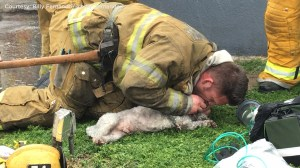 Firefighters revive 'lifeless' dog after administering CPR for 20 minutes
