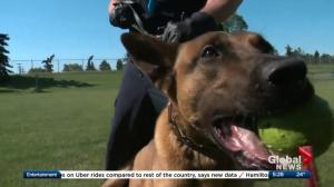 Dog becomes EPS' first K9 to specialize in finding human remains