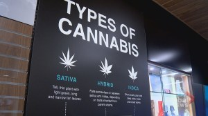 What Alberta consumers need to know before buying retail cannabis