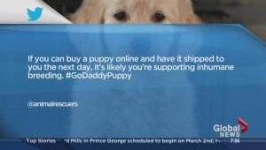 GoDaddy commercial causes controversy