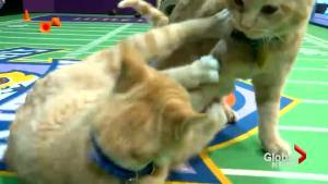 Kitten Bowl V live might be the cutest sports event ever