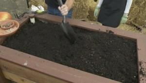 GardenWorks – Planting Garlic