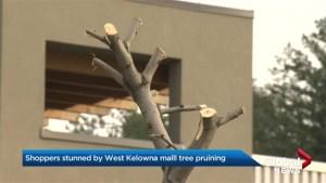 Tree Pruining hack job