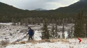 Kananaskis timber harvest going ahead amid logging concerns
