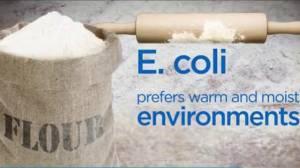 How E. coli can contaminate your flour