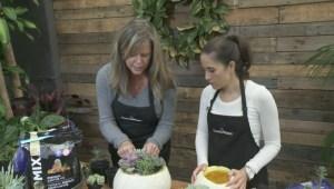 GardenWorks: Succulent Pumpkin Planters