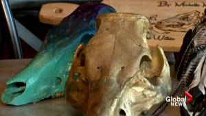 Calgary artist describes why she paints pig skulls (00:43)