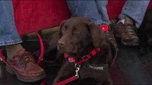 B.C. service dogs help Canadian veterans with PTSD