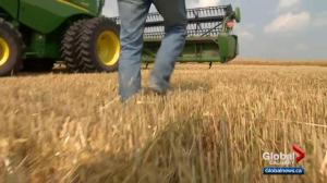 Alberta crops and trees suffer through dry conditions
