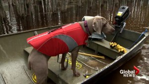 Moncton vet issues warning over floodwaters posing health risks for pets