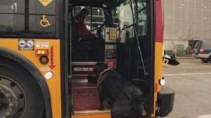 TransLink rejects pets on transit