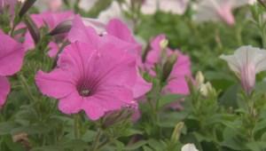 Winnipeg gardeners should prepare to protect their outdoor plants