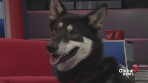 Adopt a Pet: Orius