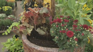 Gardenworks: Fall Planters