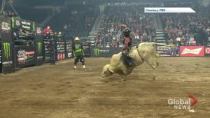Halifax petition calling for end to bull riding