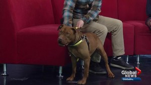 Calgary Humane Society Pet of the Week: Rosie