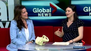 Calgary physiotherapist urges women (and men) to get in touch with their pelvic floors