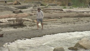 West Vancouver beaches latest to be closed due to high E.coli count