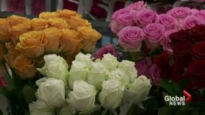 How to pick the perfect roses