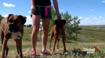 Is there a 'best spot' to walk dogs in Lethbridge?