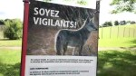 Coyotes bite 3 children in separate incidents: Montreal police