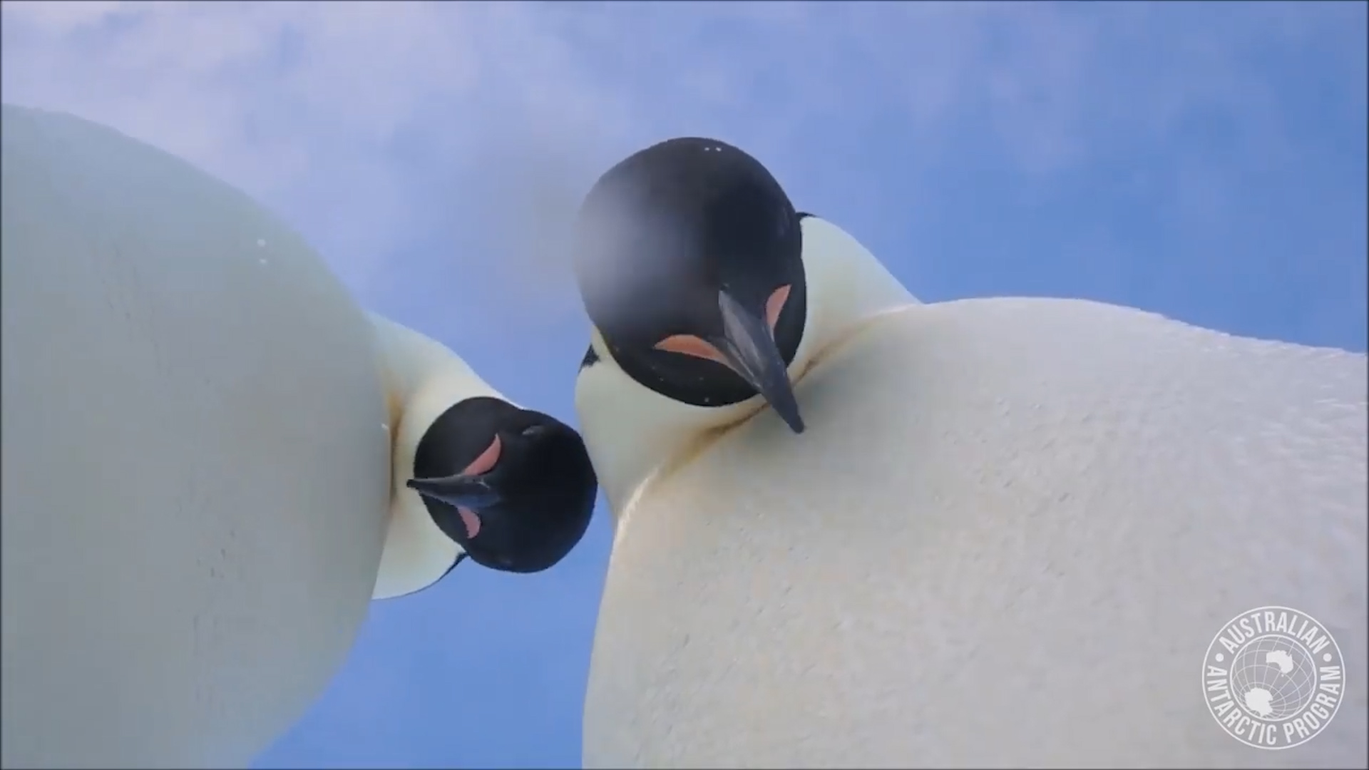 Penguins find camera, take awesome selfie