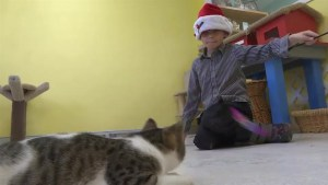 Gananoque boy asks for donations to local humane society for his birthday