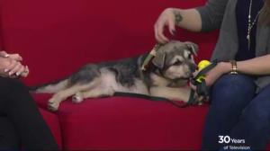 Adopt a Pet: Wilma is a playful puppy looking for a home