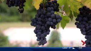 AMA Travel: Europe walking and wine tours (03:27)