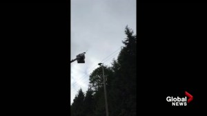 Bear cub rescued from BC Hydro pole near Port Hardy