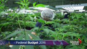 Federal budget 2016: What got left out?