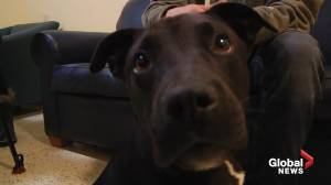 Puppy survives euthanization earning a second chance at life